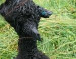 Einem Alpaka-Baby wurden am 11. Juli die Ohren abgeschnitten - jetzt sucht die Polizei Zeugen dieser abscheulichen Tat.