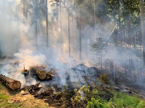 Am 29. Mai brannten Teile des Burgwaldes bei Roda.