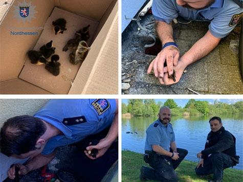 Tierischer Einsatz der Kasseler Polizei