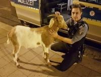 Tierischer Einsatz der Polizei in Bad Wilhelmshöhe