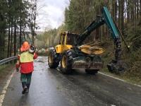 Die Landesstraße 3296 wird wegen Baumfällarbeiten voll gesperrt.