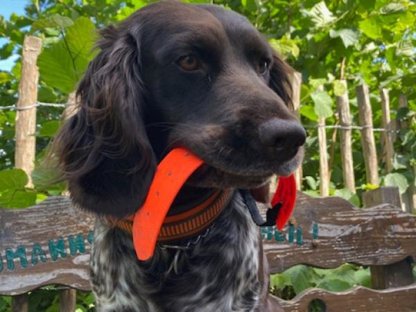 Wachtel findet vermisste Frau im Wald am Diemelsee