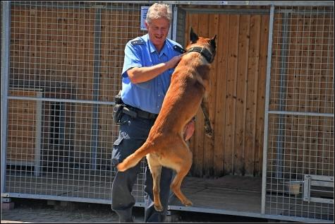 Die Freude, wenn Martin und Jakob sich wieder begegnen, ist jedes Mal zu sehen. Manchmal, während der Büroarbeit, muss Jakob in seiner Hundewohnung der Polizeistation Korbach kurz auf sein Herrchen warten.