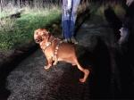 Einsatzkräfte befreiten am Freitag einen Hund aus einem Kanalrohr.