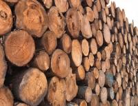 Am 19. Juli wurde ein Arbeiter auf dem Gelände der Firma Ante-Holz von einem Holzstapel erdrückt.
