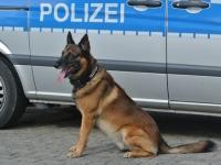 Gesuchter Straftäter durch Diensthund gestellt.