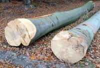 Holzfällarbeiten bei Holzhausen