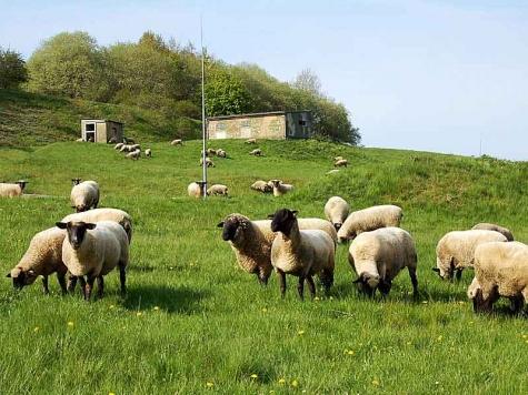 Die Polizei bittet Hundehalter, ihre Hunde im Bereich von Schafen, Pferden oder Rindern anzuleinen.