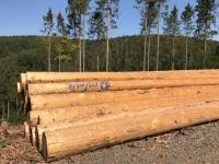 Ein Expertenteam begutachtet geschädigte Bäume an der Edersee-Randstraße - diese müssen gefällt werden.