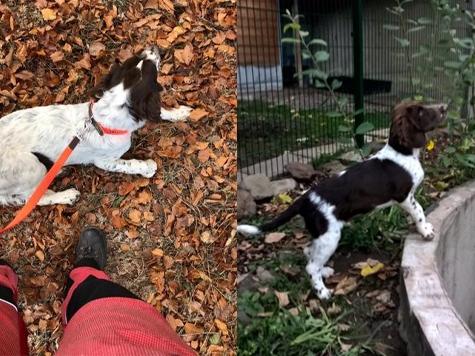 Die beiden Wachtelhunde Hänsel und Henry werden vermisst.