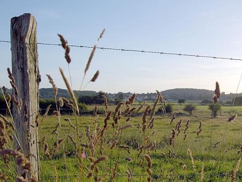 Ein Weidezaun wurde bei Lehnhausen umgefahren - der Täter flüchtete vom Unfallort.