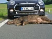 Wildunfälle im Landkreis Waldeck-Frankenberg haben zugenommen.