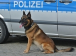Am 20. Febraur kam ein Sprengstoffspürung der Polizei im Vöhler Rathaus zum Einsatz.