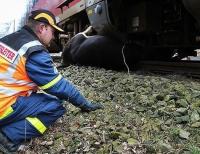 Ein Rind wurde am 31. März 2019 auf der Strecke zwischen Bad Arolsen und Volkmarsen von einem Triebwagen der Bahn erfasst und tödlich verletzt.