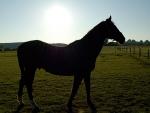 Ein Sportpferd musste am 26. Juni mit Hebegurten aus einem Keller gehoben werden.
