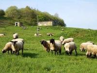 Eine 30 Kilogramm schwere Autobatterie wurde bei Battenfeld von einer Schafweide gestohlen - die Polizei sucht Zeugen.