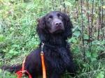 Hundebesitzer sollten ihre Tiere derzeit in Raum Lelbach an der Leine führen - eine reine Vorsichtsmaßnahme, wie die Polizei auf Nachfrage mitteilt.